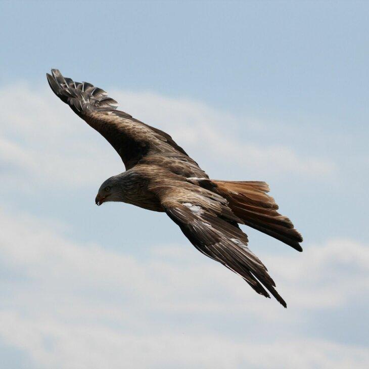 eagle 217591 1920